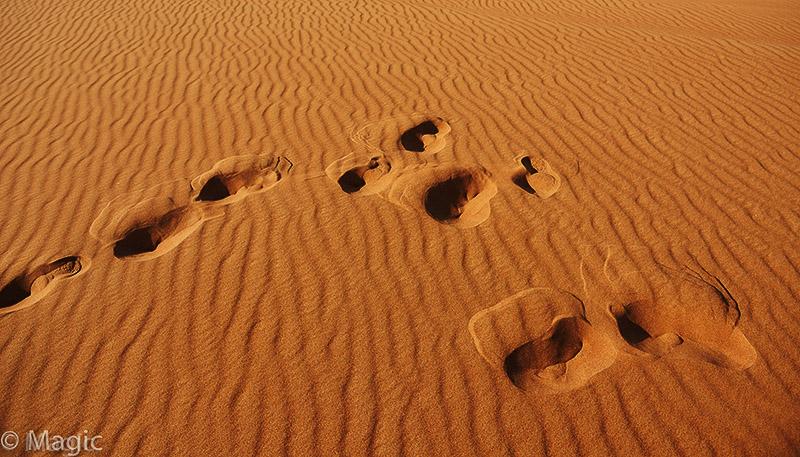 Magic-Desert-Safari_02