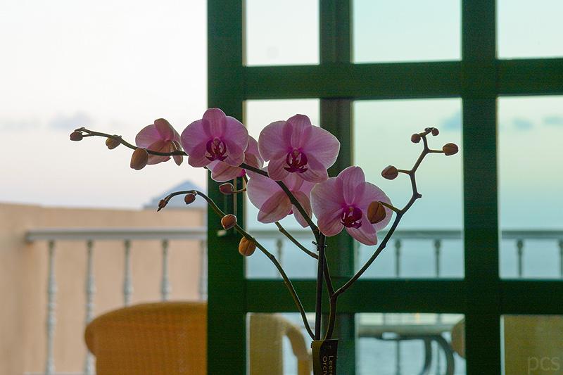Jardines-de-Nivaria-Tenerife_0320