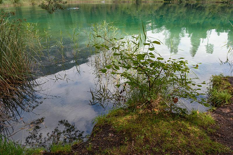 Flims-Kulinarik-Trail_8635