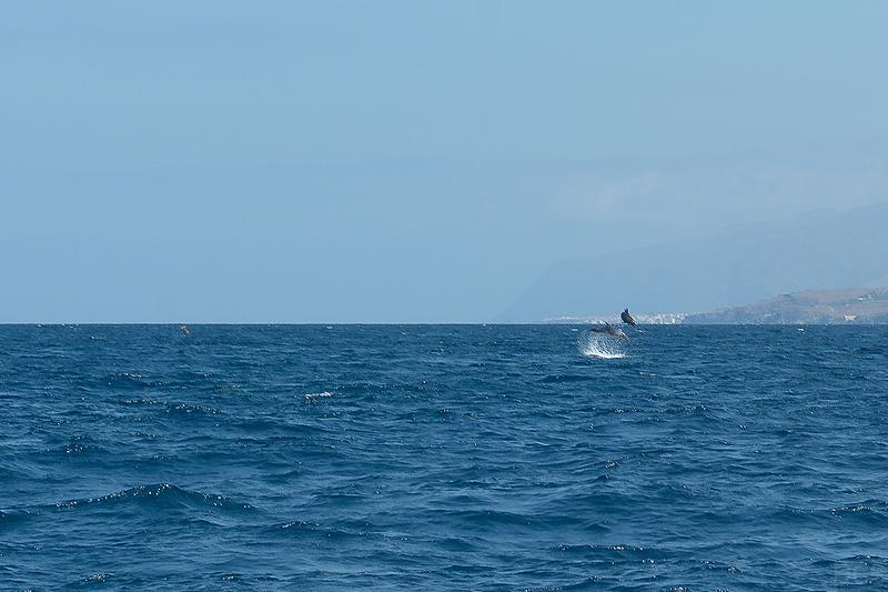 Tenerife_0461