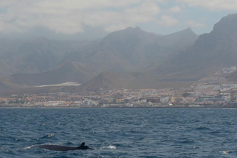 Tenerife_0484