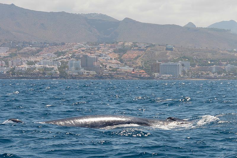 Tenerife_0669