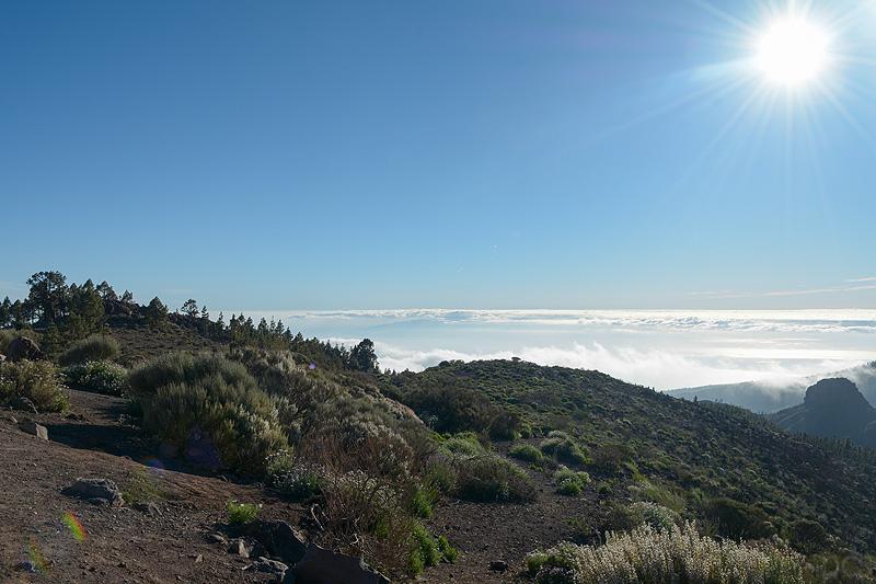 Tenerife_1538