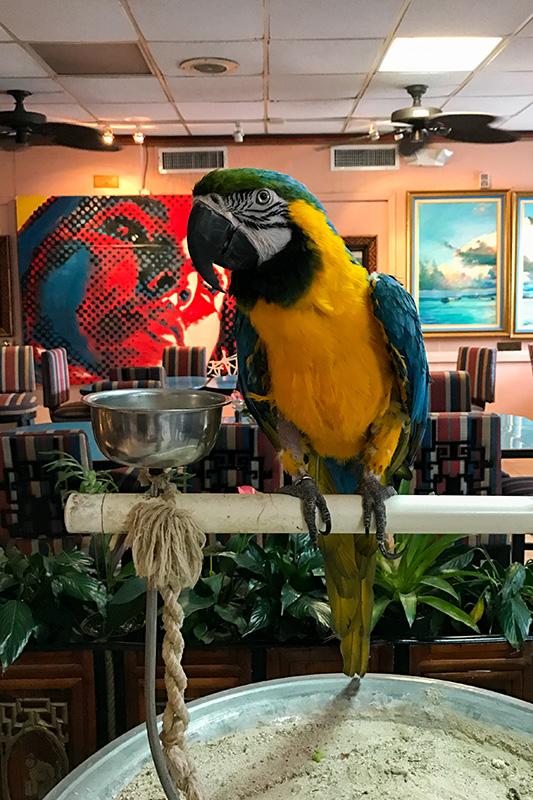 Papagei Max Towne Hotel Nassau Bahamas