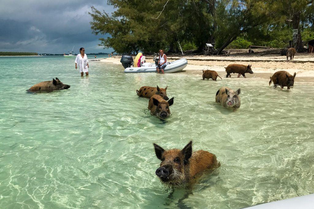 Luxify Reisebericht Bahamas